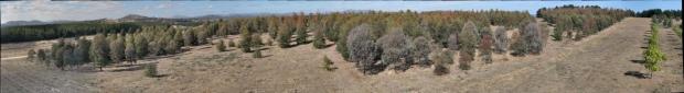 ACT arboretum gigapixel image1
